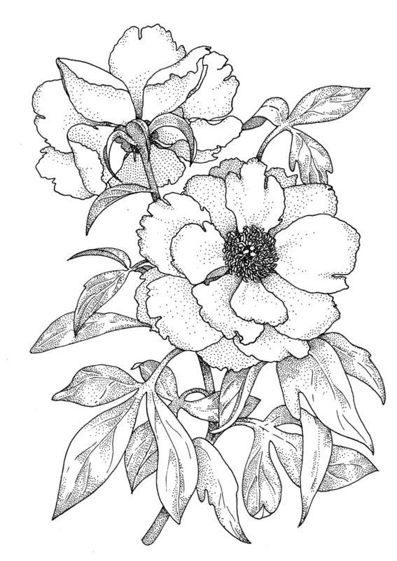 Картинки черно белых цветов