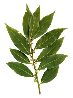 How to Dry Bay Leaves -- 3 Methods