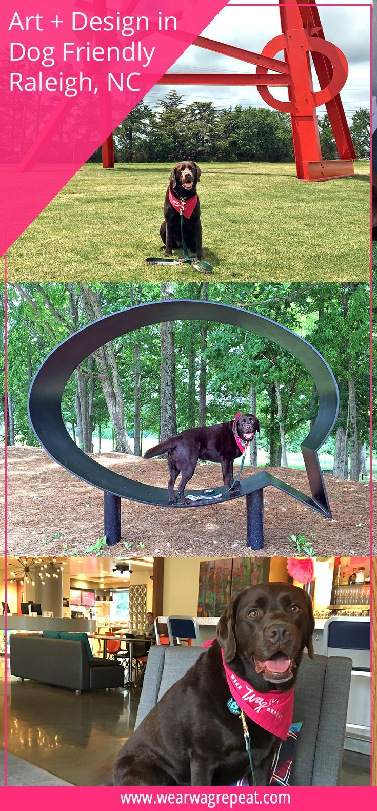 Dog friendly raleigh is full of art and design dog