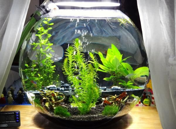 81 Best Images About Aquariums Amp Tanks On Pinterest