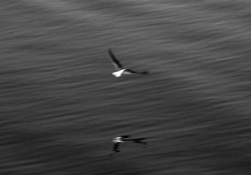 Marea, în ultima noapte a pământului Photography © Florin Constantinescu, www.crosslight.ro