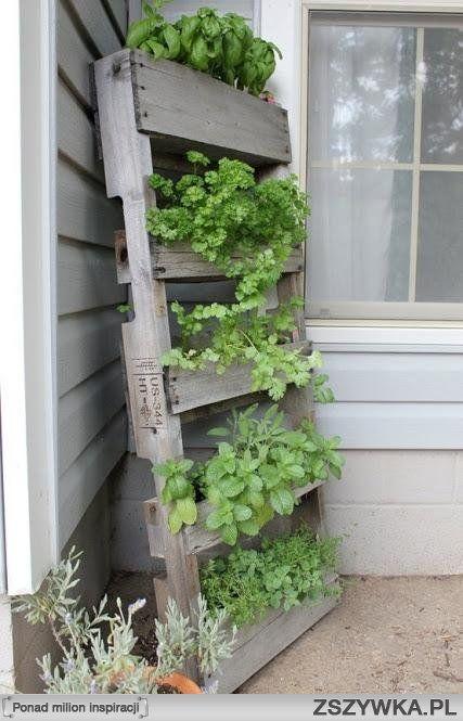 Znalezione obrazy dla zapytania domowe rośliny ziołowe