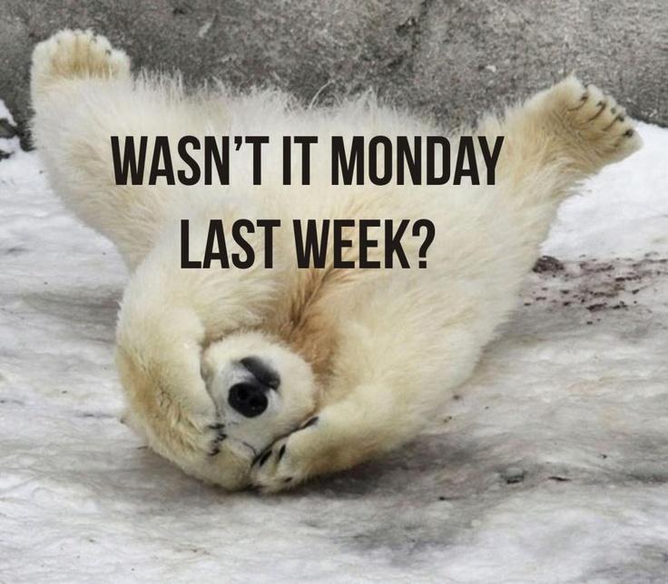 Mondays (With images) Baby polar bears, Polar bear