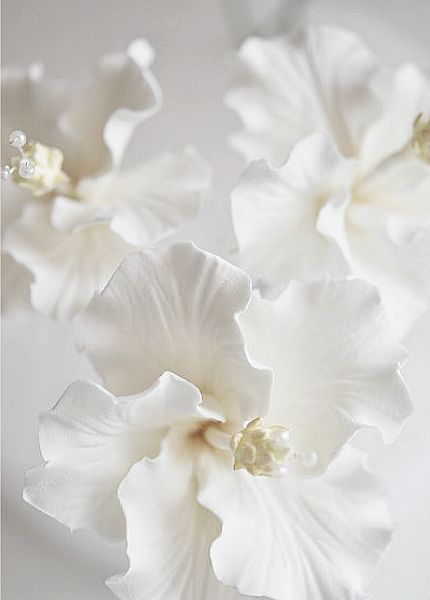 Sparkleprettysomething white pinterest white flowers flowers sparkleprettysomething white pinterest white flowers flowers and color mightylinksfo