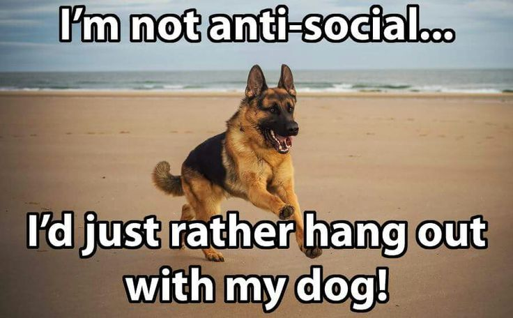 I just want to hang out with my German Shepherd for dog lovers.