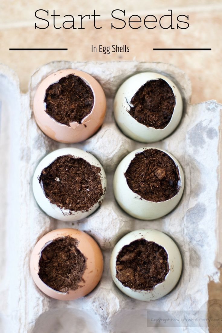 How To Start Seeds In Egg Shells. A few tips for successful seed planting in a bit of soil and an empty eggshell.  A truly eco friendly way of starting seeds.