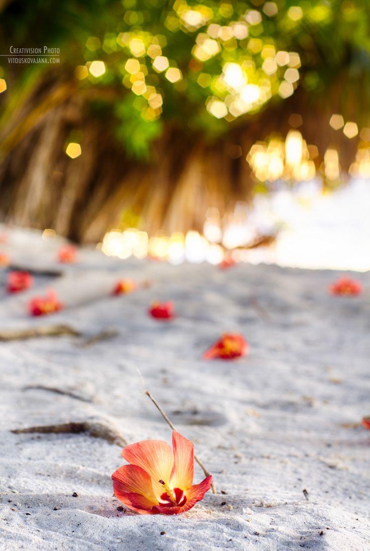 flowers and beach at Kuramathi Island Resort