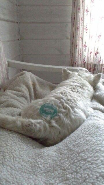 Edustaminen hillittömässä helteessä on rankkaa. Pienen uintireissun jälkeen on hyvä mamman jalkopäässä nukkua mökillä. #Limuset