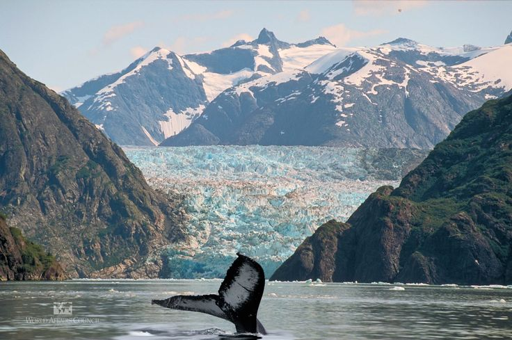 A whale in Alaska's waters