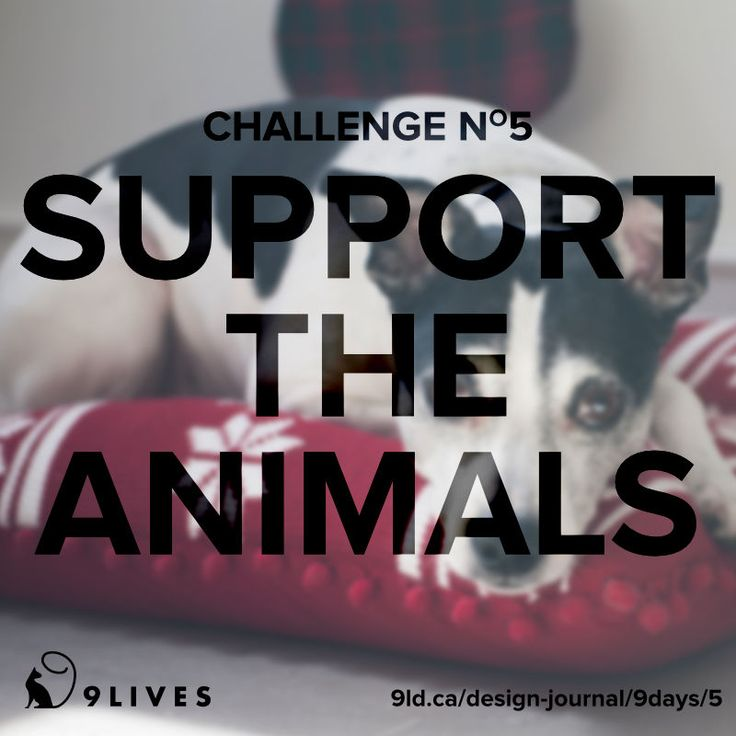 9 Lives Design Holiday Spirit Challenge #5 – Support the Animals! #cats #dogs Read a list of items you can donate to the shelters http://www.9livesdesign.ca/design-journal/9days/5