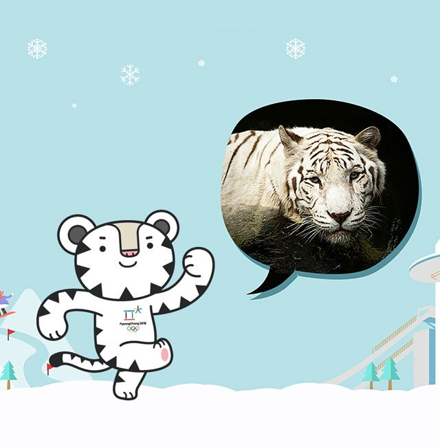 Soohorang, the mascot of the PyeongChang 2018 Olympic Winter Games took its motif from the white tiger. Soohorang not only has a challenging spirit and passion but also is a trustworthy friend who protects the athletes, spectators and all participants in the Olympic Games. Can't wait for Soohorang's remarkable activities!