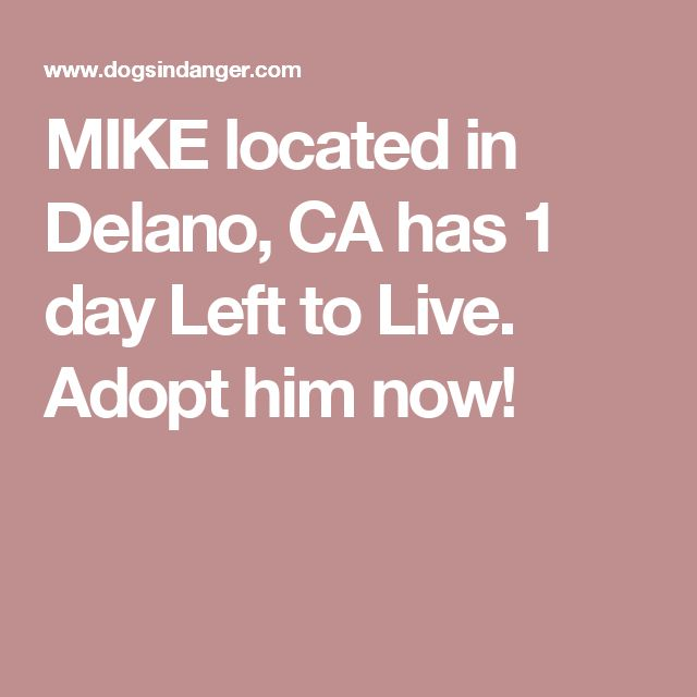 MIKE located in Delano, CA  has 1 day Left to Live. Adopt him now!