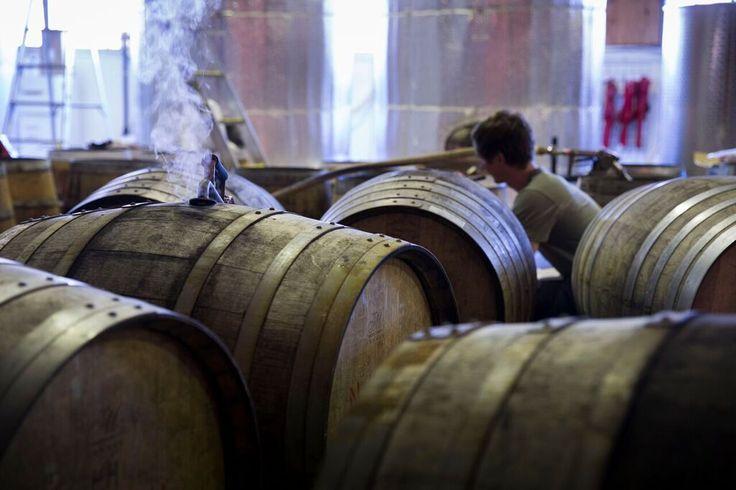 STARWARD whisky barrels