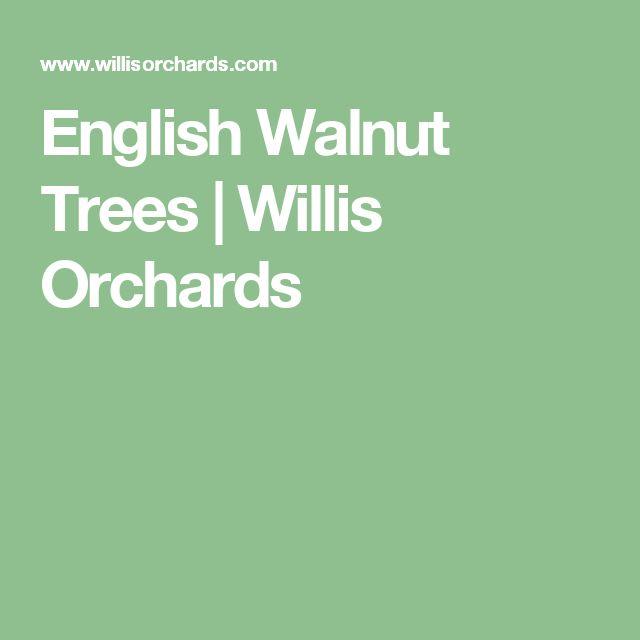 English Walnut Trees  | Willis Orchards