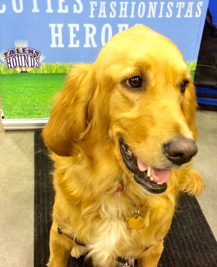 http://talenthounds.ca/news/latest-buzz-news/photo-album-day-1-of-canadian-pet-expo/