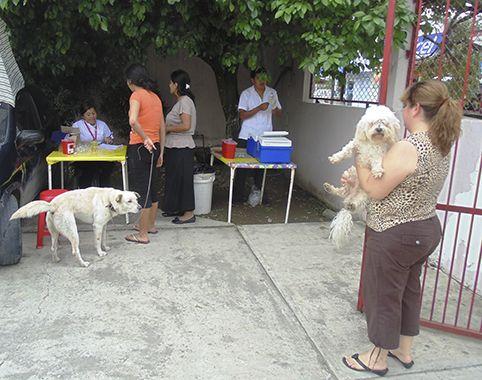 #Inicia vacunación de perros y gatos - Diario de Poza Rica: Diario de Poza Rica Inicia vacunación de perros y gatos Diario de Poza Rica…