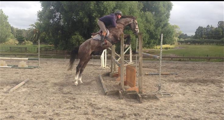 http://www.coupeequestrian.com/Horses-for-Sale.html