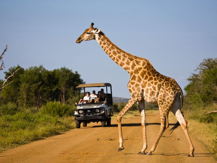 Family Safari in South Africa : 8 Adventurous Vacations the Whole Family Will Love : TravelChannel.com