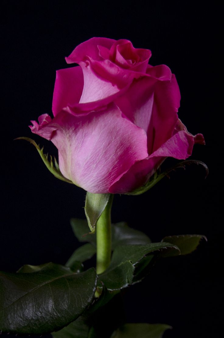 835 best lovely flowers images on pinterest flowers beautiful