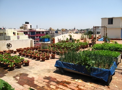 13 best images about gardening on pinterest gardens for Terrace kitchen garden india