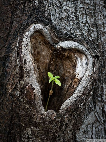♡ Tree heart with sprout