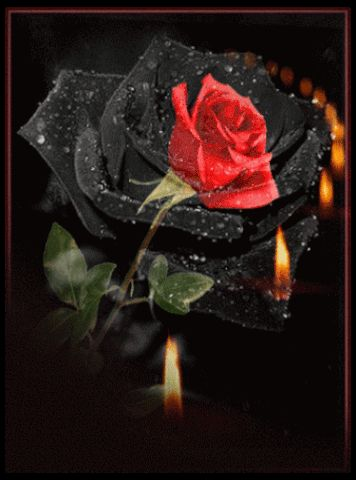 300 best images about rote rosen red roses on. Black Bedroom Furniture Sets. Home Design Ideas