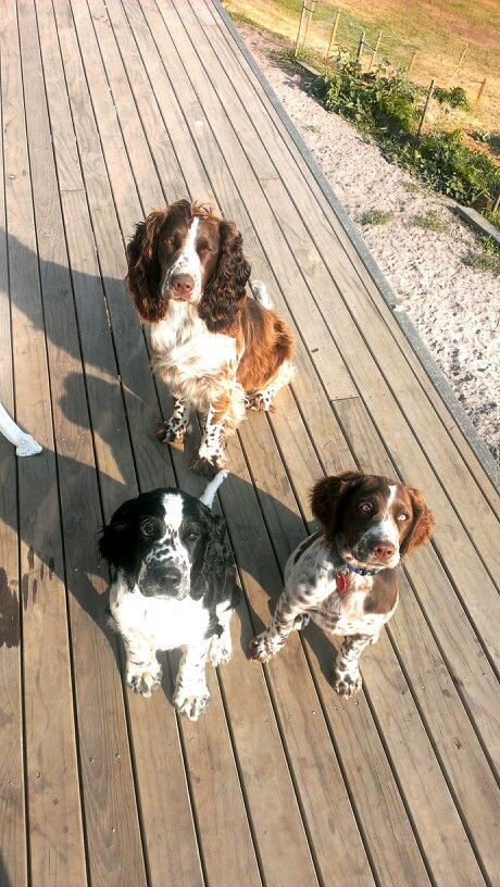 Ms maddie and her cousins Bella and Boof