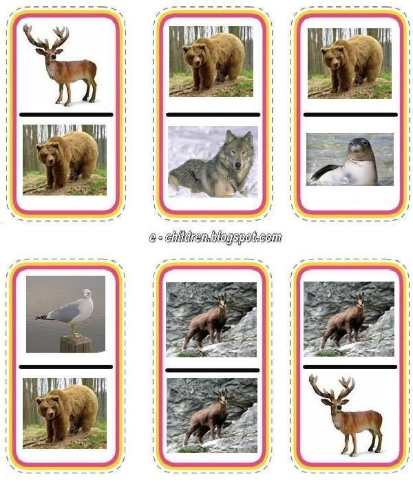 állatok 4