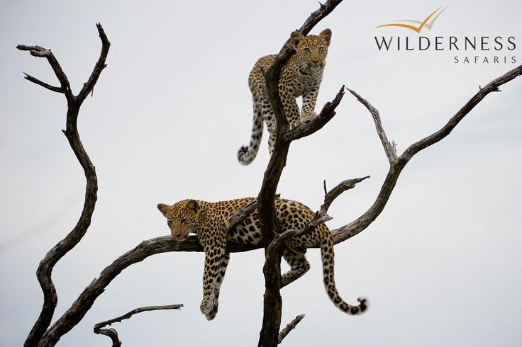 Jao Camp - The abundant prey species attract a healthy following of predators. #Safari #Africa #Botswana #WildernessSafaris