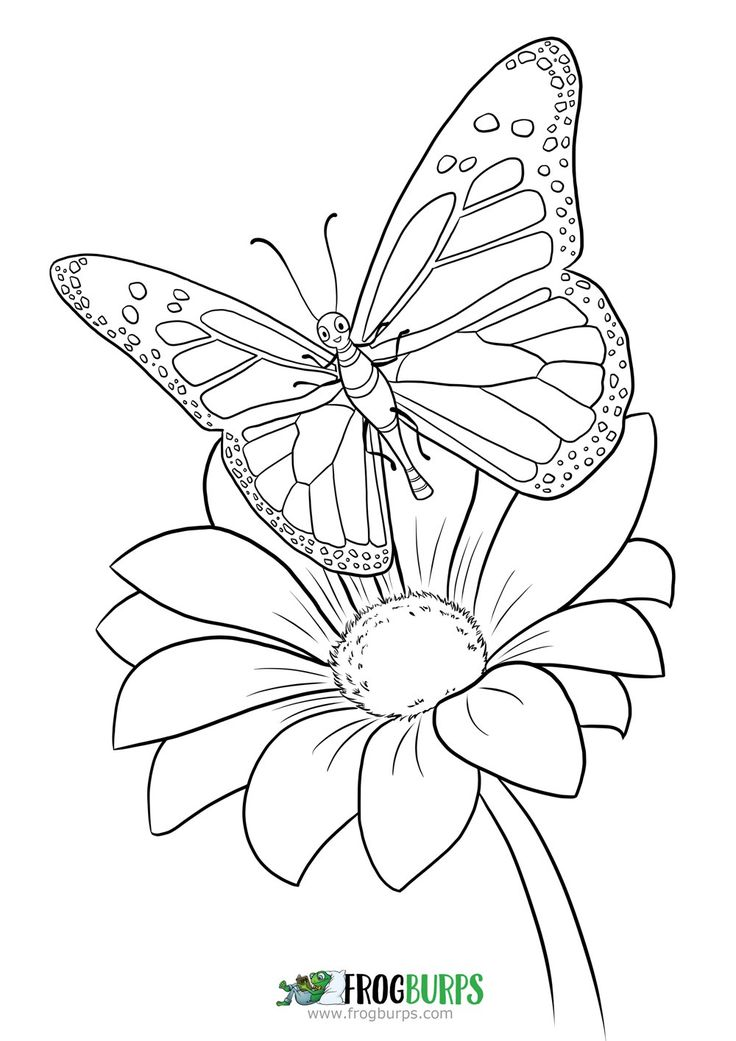 Butterfly | Coloring Page