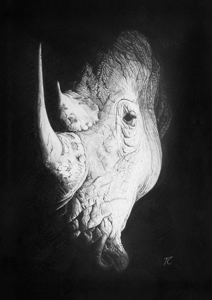Rhino Spotlight by Tracie Callaghan