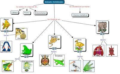 ... mamíferos tienen pelo; las aves tienen plumas; los peces y los reptiles  tienen escamas; los anfibios tienen la piel desnuda. Entre estos se  encuentran: