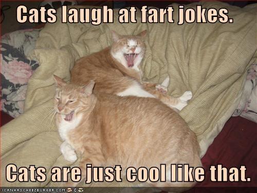 Funny Animal Farts Compilation. - YouTube   Animal Fart Memes