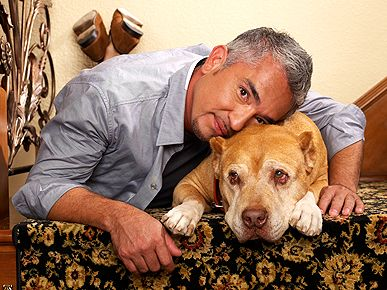 Cesar Millan Daddy Died | Cesar Millan's Beloved Pit Bull Daddy Dies at 16 - Stars and Pets ...  I felt so bad for ceasar when daddy died .I personally know how hard it is to loose a best friend I lost two best friends (fur babies).r.i.p daddy  :-(