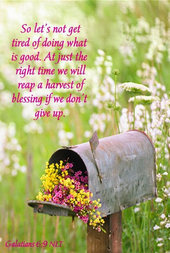 Sweet Magnolias Farm: Did your Mole Hill turn into a Mountain ? ~ Our Daily Bread ~