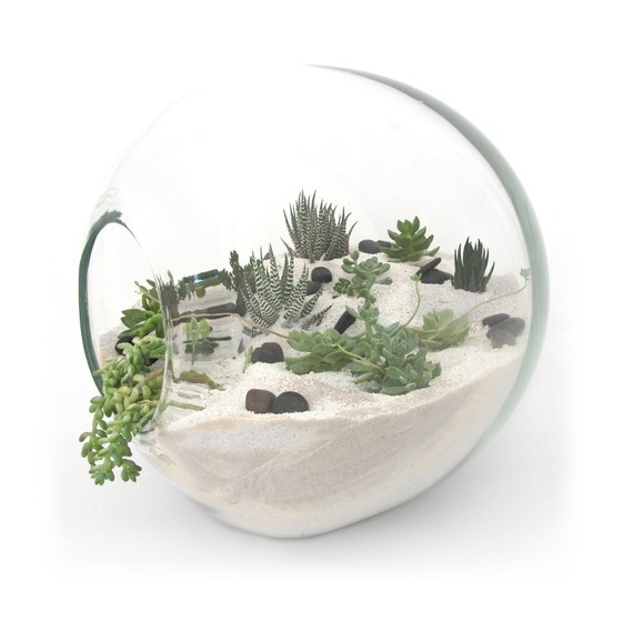 Idea for a small centre piece? Cheap glass bowl, some sand, and bits of shrubbery.
