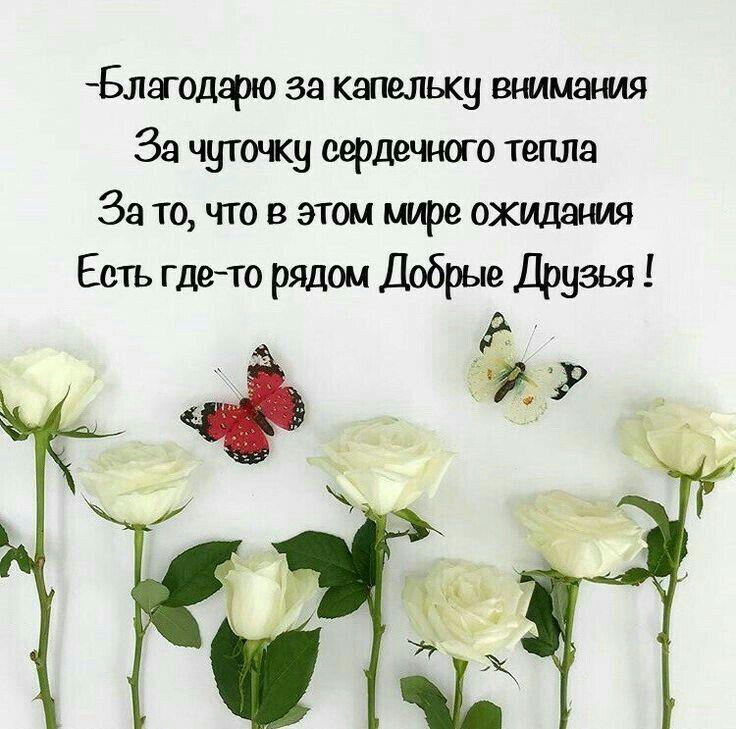 нас семье красивые поздравления с днем рождения цитаты цветной капусты семенами