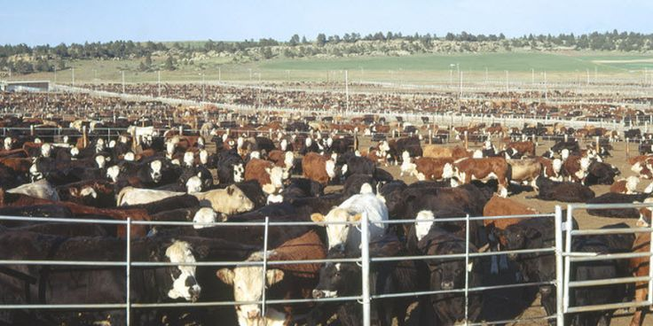 Cattle prices have had a rough spring. After peaking in late 2014 and early 2015, prices have been adjusting downward from very lofty peaks. High prices and profits at that time provided the incentives to expand beef production. Expanding beef production and a remarkable recovery in total meat supplies continues to put downward pressure on cattle prices. Unfortunately, more downward price pressure is expected this summer.Finished cattle prices reached their year-to-date high in the third...