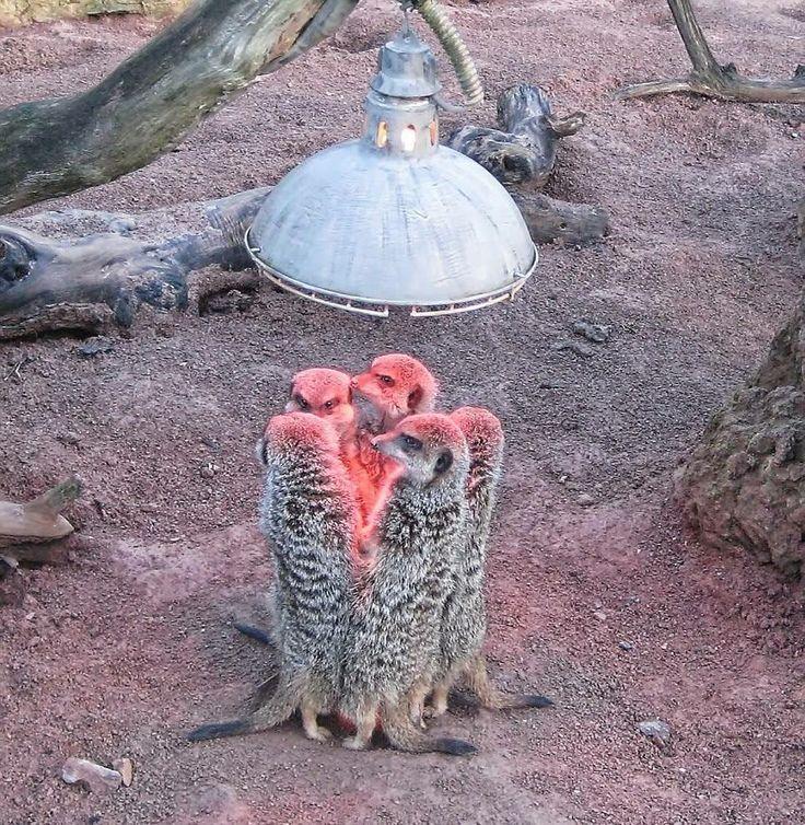 tenemos frio......   Смешные фотографии животных, Животные ...