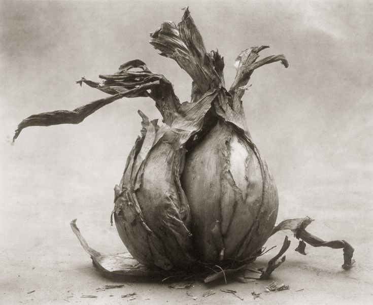 Onion I ©Cy DeCosse Fine Art Photography. The Beauty of Food Collection. Limited edition platinum-palladium print. CyDeCosse.com #photography #art #food