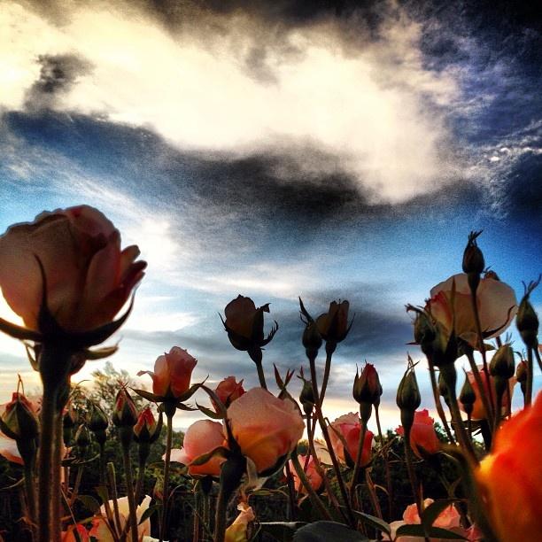 Flowers inter roses Photo by mandongocat