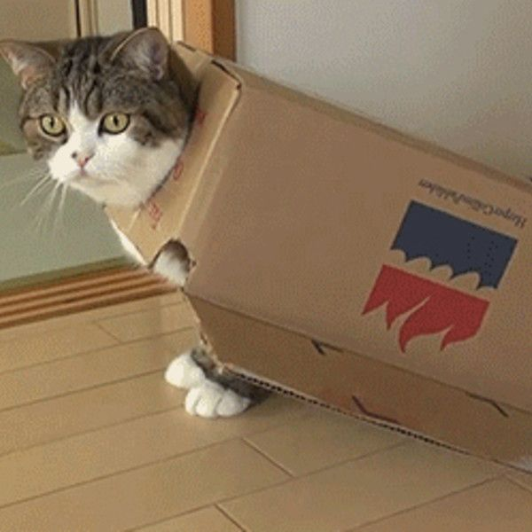 19 Irresistible GIFs of Cats in Boxes