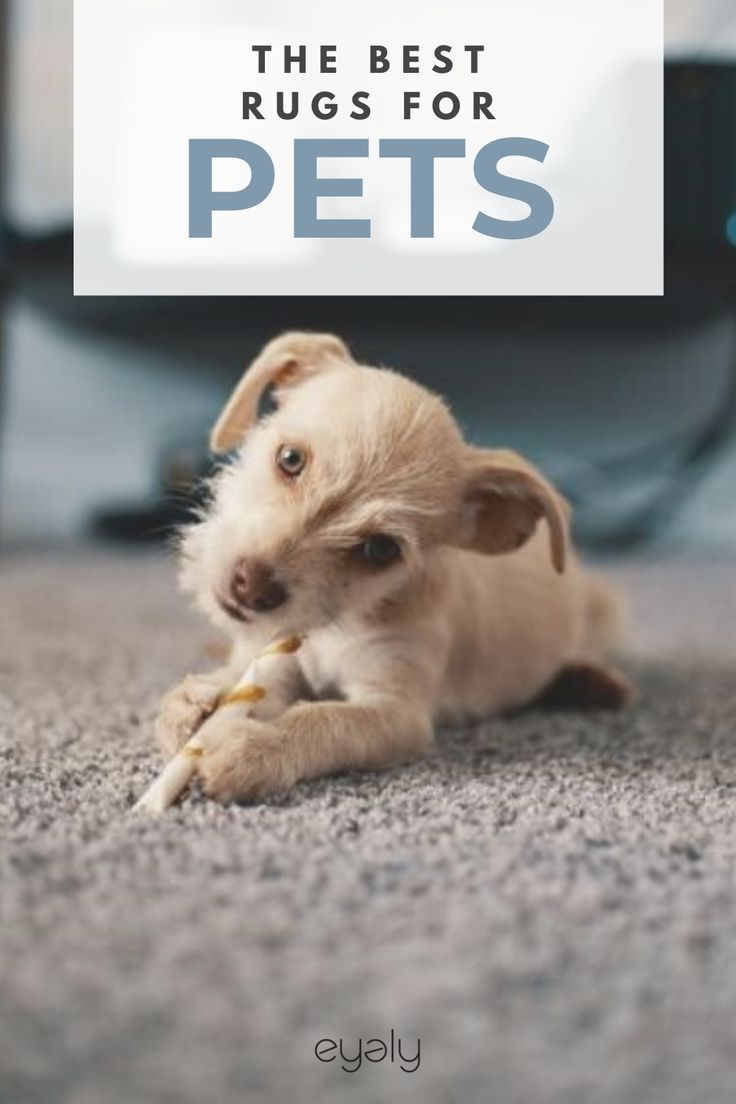 Rustic Home Decor Shopping For An Area Rug When You Have Pets Can Be A Challenge Some People Think Rugs And Pets Dont M In 2020 Dog Enrichment Top Dog Names