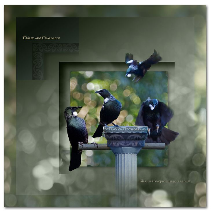 The Tui display thirst and character, flight, intelligence, hunger, nectar http://ianandersonfineart.com/