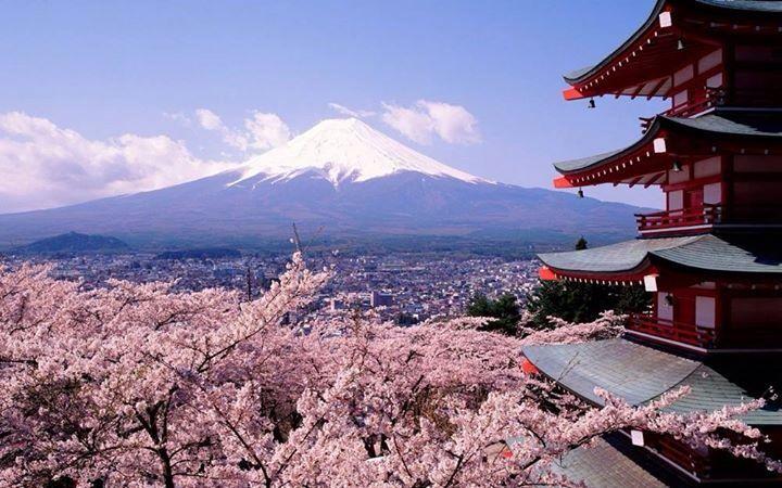 Cherry Blossoms & Mount Fuji, Japan