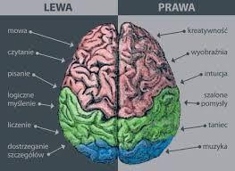 Znalezione obrazy dla zapytania co wpływa na dobrą pracę mózgu
