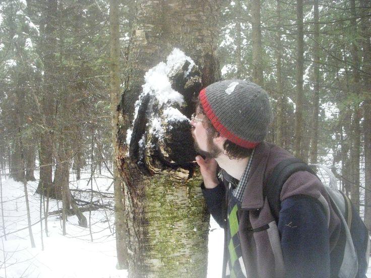 big mushroom how to cut stardew valley