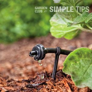 Don't Waste a Drop: DIY Drip Kits | Garden Club