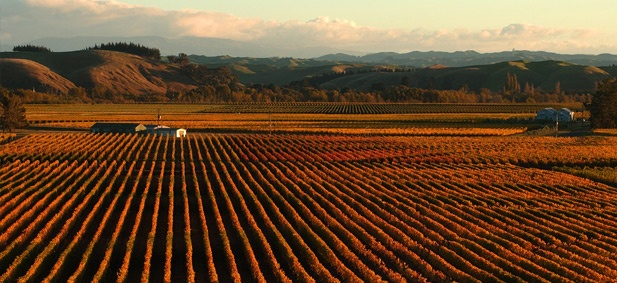 Hawkes Bay Wine Country, New Zealand
