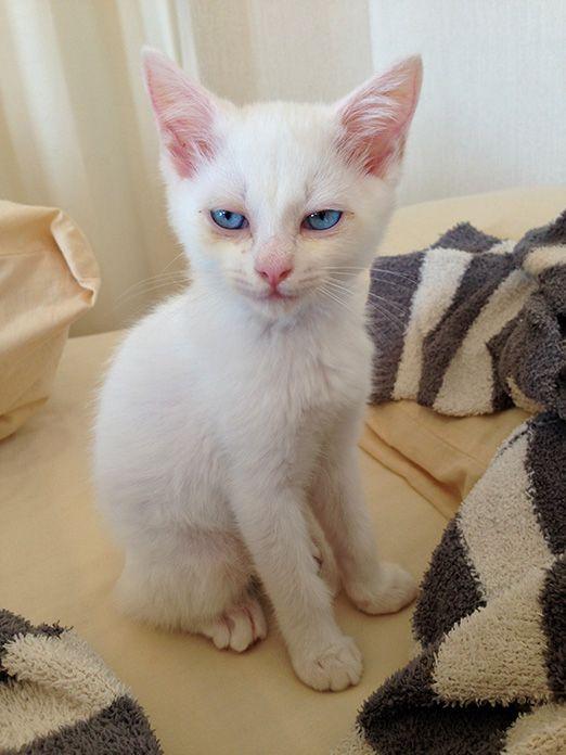 セツという猫1 | 残念なイケメン猫 揺るぎなきセツSTYLE | いぬのきもち・ねこのきもち